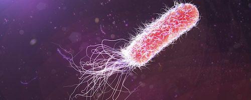 کاهش و درمان عفونت با قارچ گانودرما