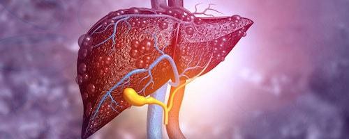 خواص قارچ گانودرما برای سلامت کبد